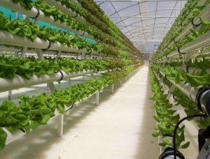vertical hydroponic vegetable garden