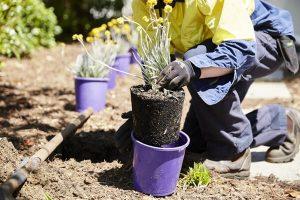 A man planting a tree in a plastic pot