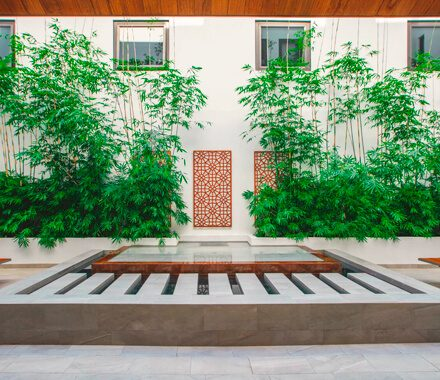 plants outside a house